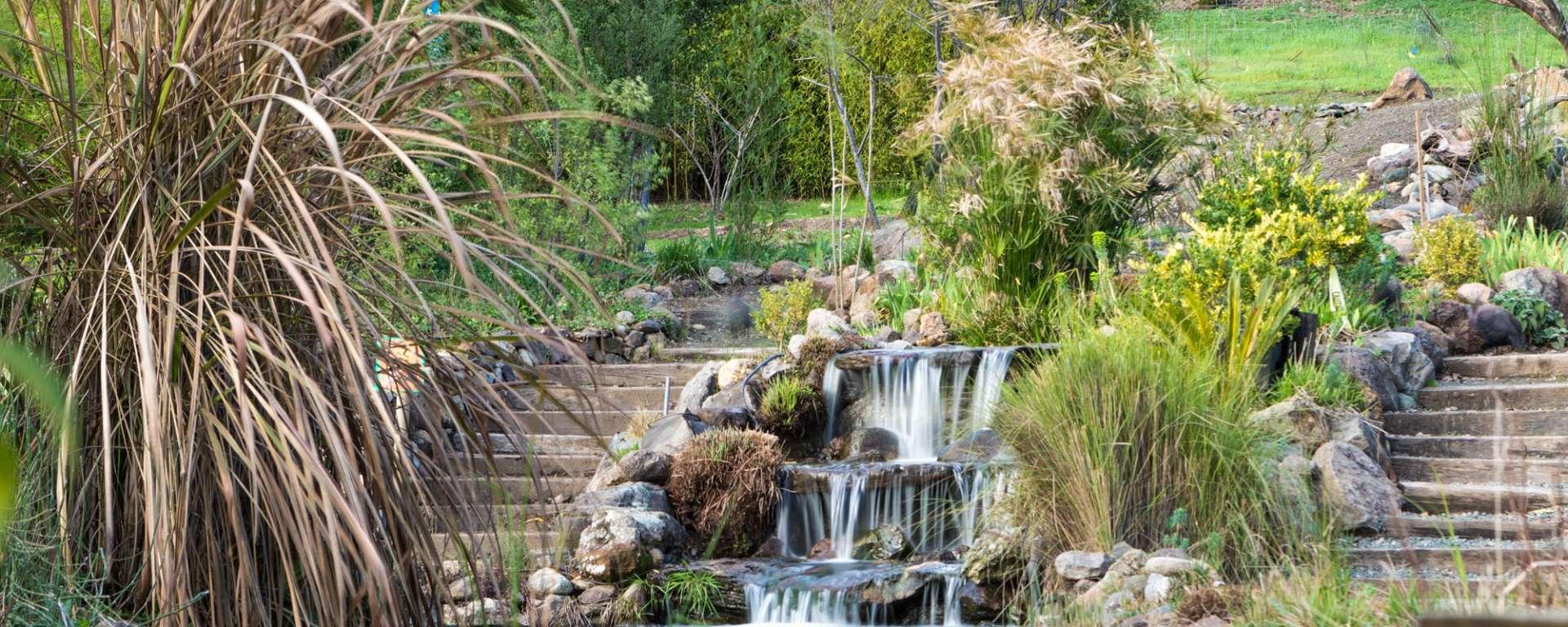 Lemur Island Koi Pond