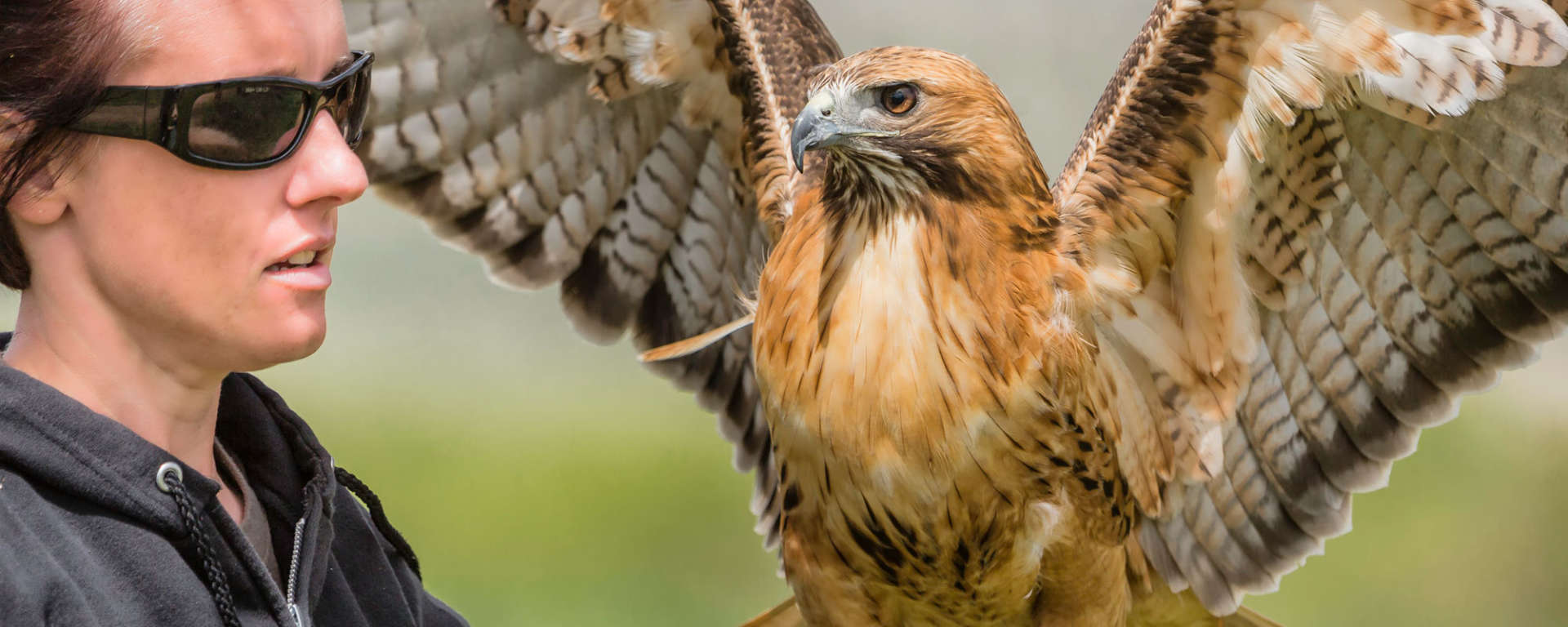 Melissa Toffleomoyer with a Red Tailed Hawk