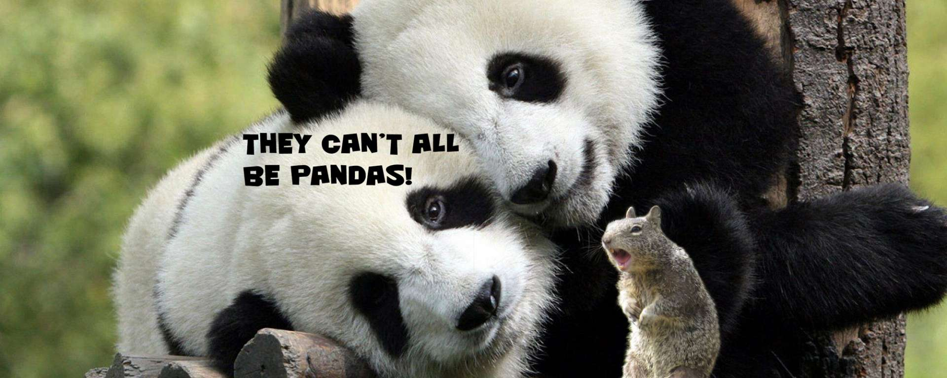 They Can't All Be Pandas