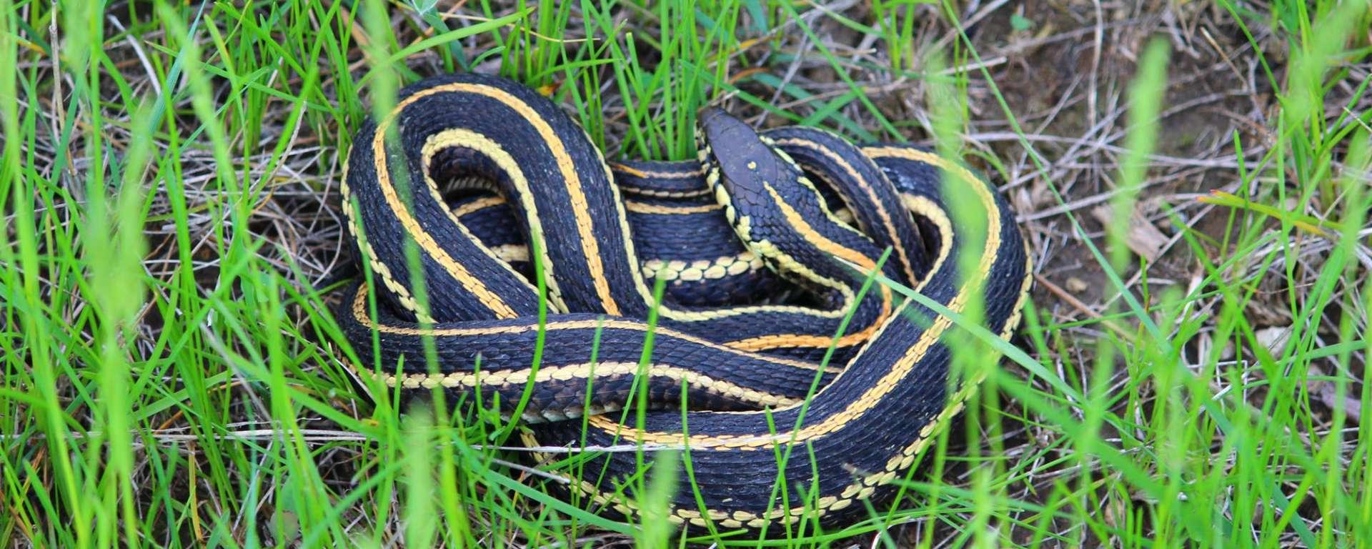 safari spotlight snakes in the grass safari west