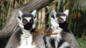We are in this Together Lemurs with Mask