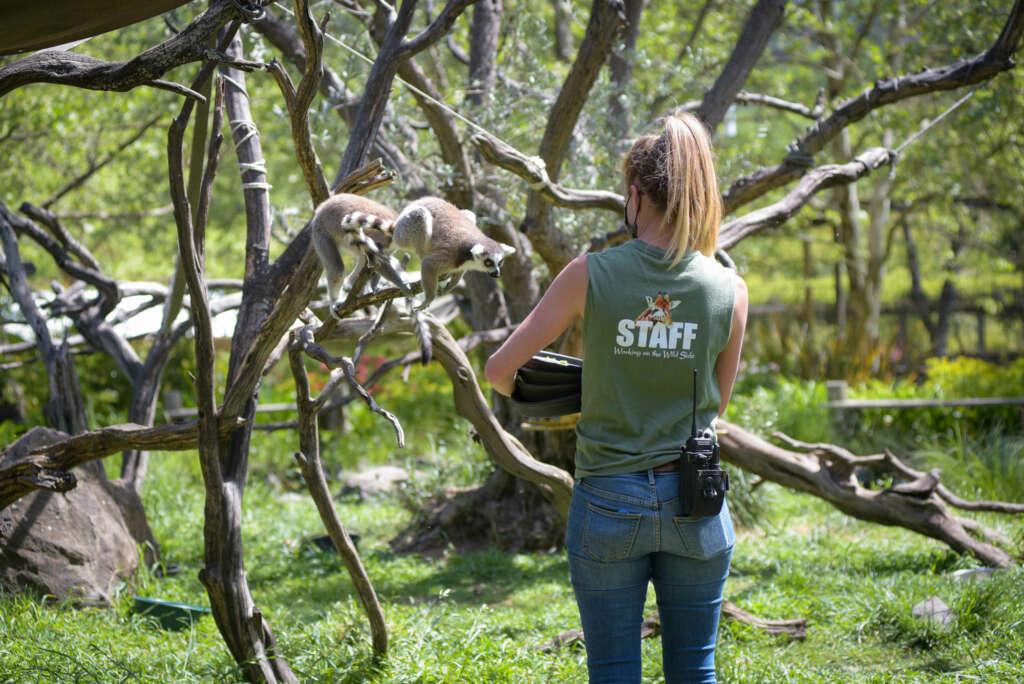 lemur with Jen