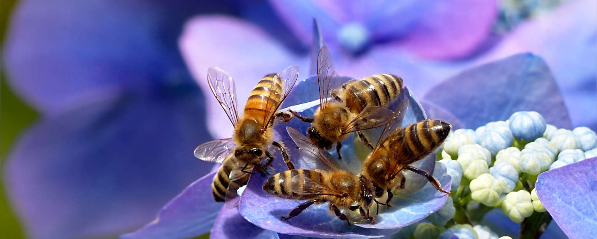 Honey Bees and Flower