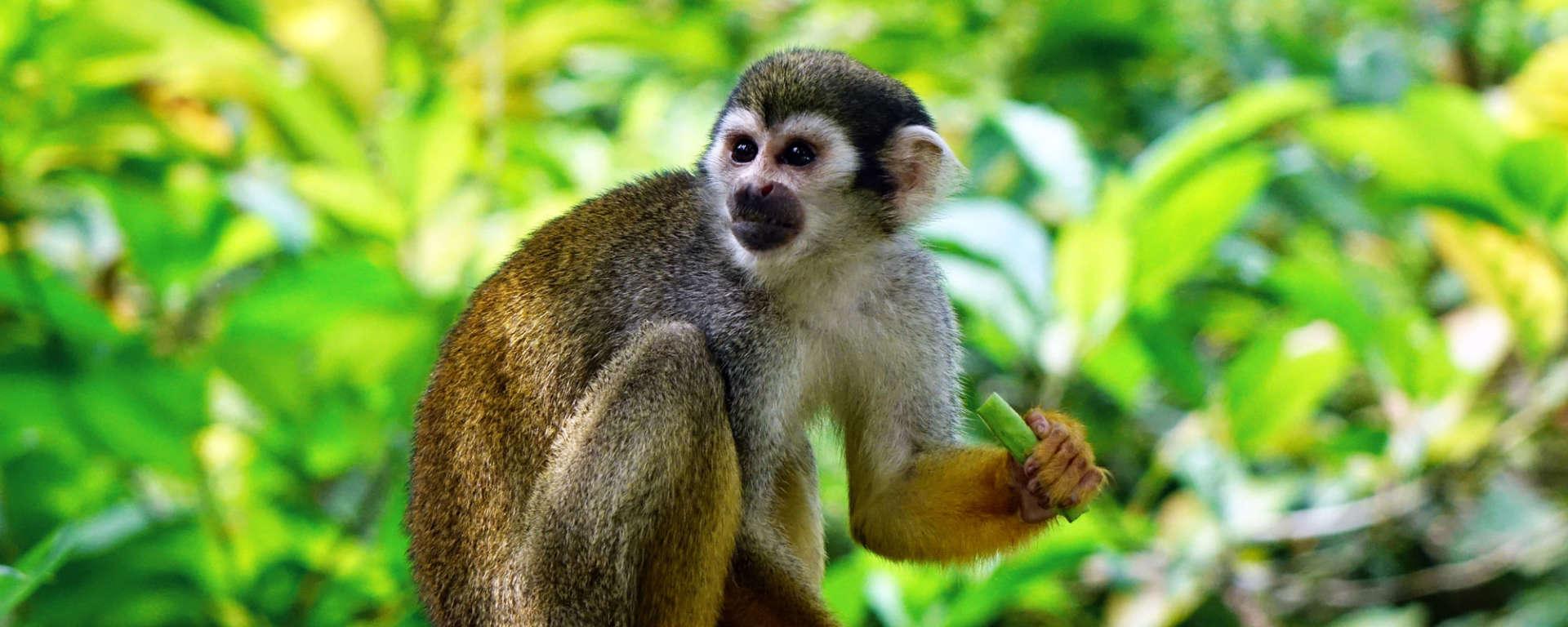 Squirrel Monkey Haven